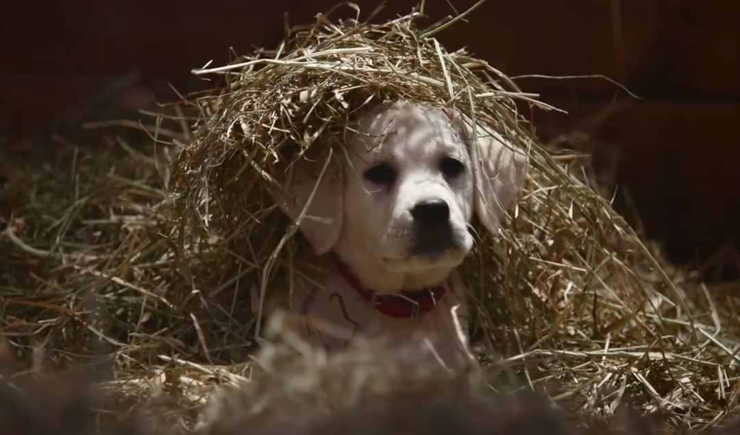 2015 Superbowl adverts – what caught our eye